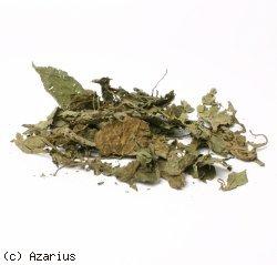 Bezugsquellen Salvia Divinorum